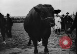 Image of agricultural show Bellahoj Denmark, 1943, second 49 stock footage video 65675071390