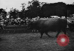 Image of agricultural show Bellahoj Denmark, 1943, second 52 stock footage video 65675071390