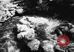 Image of Alewives Maine United States USA, 1957, second 9 stock footage video 65675071463