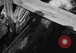 Image of Alewives Maine United States USA, 1957, second 23 stock footage video 65675071463