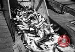 Image of Alewives Maine United States USA, 1957, second 46 stock footage video 65675071463