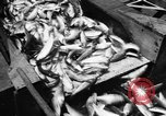 Image of Alewives Maine United States USA, 1957, second 49 stock footage video 65675071463