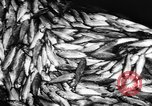 Image of Alewives Maine United States USA, 1957, second 53 stock footage video 65675071463