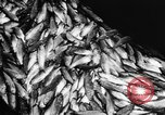 Image of Alewives Maine United States USA, 1957, second 54 stock footage video 65675071463