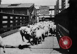 Image of Chicago stockyards Chicago Illinois USA, 1897, second 4 stock footage video 65675071534