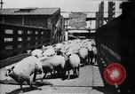 Image of Chicago stockyards Chicago Illinois USA, 1897, second 5 stock footage video 65675071534