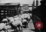 Image of Chicago stockyards Chicago Illinois USA, 1897, second 6 stock footage video 65675071534