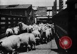 Image of Chicago stockyards Chicago Illinois USA, 1897, second 11 stock footage video 65675071534