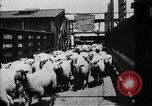 Image of Chicago stockyards Chicago Illinois USA, 1897, second 14 stock footage video 65675071534