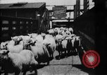 Image of Chicago stockyards Chicago Illinois USA, 1897, second 15 stock footage video 65675071534