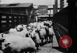 Image of Chicago stockyards Chicago Illinois USA, 1897, second 17 stock footage video 65675071534