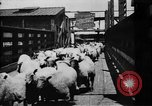 Image of Chicago stockyards Chicago Illinois USA, 1897, second 18 stock footage video 65675071534