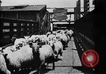 Image of Chicago stockyards Chicago Illinois USA, 1897, second 19 stock footage video 65675071534