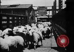 Image of Chicago stockyards Chicago Illinois USA, 1897, second 20 stock footage video 65675071534