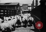 Image of Chicago stockyards Chicago Illinois USA, 1897, second 21 stock footage video 65675071534