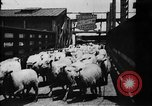 Image of Chicago stockyards Chicago Illinois USA, 1897, second 22 stock footage video 65675071534