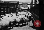 Image of Chicago stockyards Chicago Illinois USA, 1897, second 23 stock footage video 65675071534