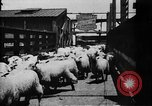 Image of Chicago stockyards Chicago Illinois USA, 1897, second 24 stock footage video 65675071534