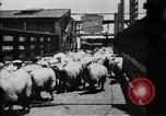 Image of Chicago stockyards Chicago Illinois USA, 1897, second 25 stock footage video 65675071534