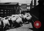 Image of Chicago stockyards Chicago Illinois USA, 1897, second 26 stock footage video 65675071534