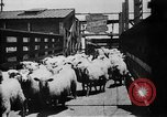 Image of Chicago stockyards Chicago Illinois USA, 1897, second 27 stock footage video 65675071534