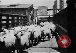 Image of Chicago stockyards Chicago Illinois USA, 1897, second 28 stock footage video 65675071534