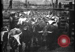 Image of Cattle to slaughter Chicago Illinois USA, 1897, second 7 stock footage video 65675071535