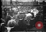Image of Cattle to slaughter Chicago Illinois USA, 1897, second 8 stock footage video 65675071535