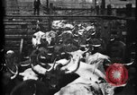 Image of Cattle to slaughter Chicago Illinois USA, 1897, second 13 stock footage video 65675071535