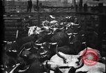 Image of Cattle to slaughter Chicago Illinois USA, 1897, second 15 stock footage video 65675071535