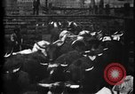Image of Cattle to slaughter Chicago Illinois USA, 1897, second 17 stock footage video 65675071535