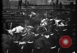 Image of Cattle to slaughter Chicago Illinois USA, 1897, second 18 stock footage video 65675071535
