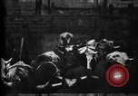 Image of Cattle to slaughter Chicago Illinois USA, 1897, second 20 stock footage video 65675071535