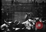 Image of Cattle to slaughter Chicago Illinois USA, 1897, second 22 stock footage video 65675071535