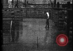 Image of Cattle to slaughter Chicago Illinois USA, 1897, second 32 stock footage video 65675071535