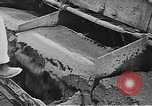 Image of Hoover Dam construction progress in 1934 United States USA, 1934, second 33 stock footage video 65675071603