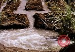 Image of agriculture United States USA, 1956, second 53 stock footage video 65675071647