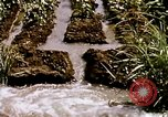 Image of agriculture United States USA, 1956, second 55 stock footage video 65675071647