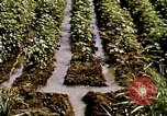 Image of agriculture United States USA, 1956, second 57 stock footage video 65675071647