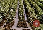 Image of agriculture United States USA, 1956, second 58 stock footage video 65675071647
