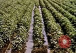 Image of agriculture United States USA, 1956, second 59 stock footage video 65675071647