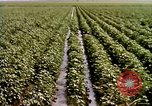 Image of agriculture United States USA, 1956, second 60 stock footage video 65675071647