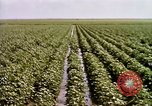 Image of agriculture United States USA, 1956, second 61 stock footage video 65675071647