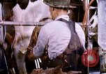 Image of harvesting chickens fruits and vegatables United States USA, 1956, second 1 stock footage video 65675071652