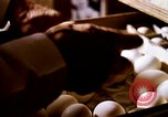 Image of harvesting chickens fruits and vegatables United States USA, 1956, second 22 stock footage video 65675071652