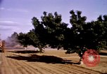 Image of harvesting chickens fruits and vegatables United States USA, 1956, second 37 stock footage video 65675071652