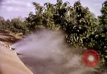 Image of harvesting chickens fruits and vegatables United States USA, 1956, second 46 stock footage video 65675071652