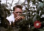 Image of harvesting chickens fruits and vegatables United States USA, 1956, second 57 stock footage video 65675071652