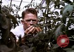 Image of harvesting chickens fruits and vegatables United States USA, 1956, second 58 stock footage video 65675071652