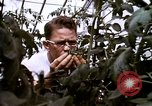 Image of harvesting chickens fruits and vegatables United States USA, 1956, second 59 stock footage video 65675071652
